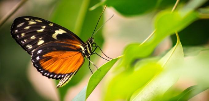 Garten der Schmetterlinge Friedrichsruh
